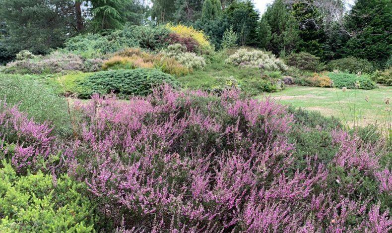 Jardins des callunes bruyère